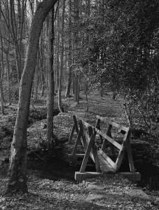 woodland_bridge_scan00622