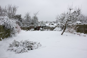 Garden_snow_Jan2013_1200_1028
