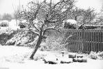 snowy_garden