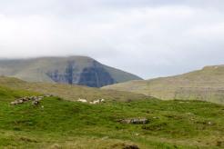 Faroes_4649
